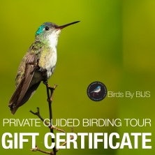 Private Guided Birding Tour Gift Certificate