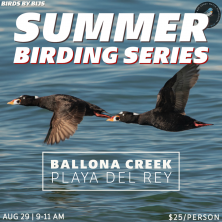 Summer Birding Series Outings